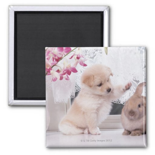 Puppy and Lop Ear Rabbit 2 Inch Square Magnet
