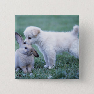 Puppy and Lop Ear Rabbit on lawn Button