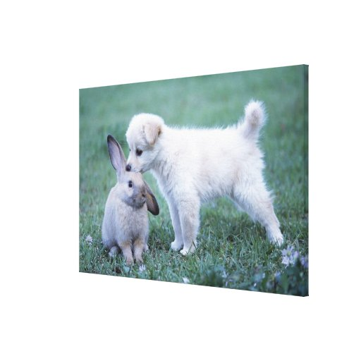 Puppy and Lop Ear Rabbit on lawn Stretched Canvas Prints
