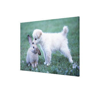 Puppy and Lop Ear Rabbit on lawn Canvas Print