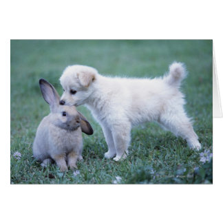Puppy and Lop Ear Rabbit on lawn Card