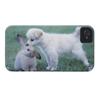Puppy and Lop Ear Rabbit on lawn iPhone 4 Cover