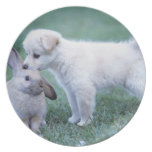 Puppy and Lop Ear Rabbit on lawn Party Plates