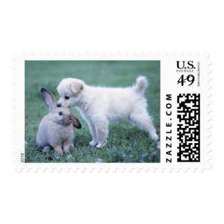 Puppy and Lop Ear Rabbit on lawn Stamp