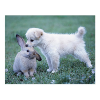 Puppy and Lop Ear Rabbit on lawn Postcard