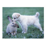Puppy and Lop Ear Rabbit on lawn Postcards