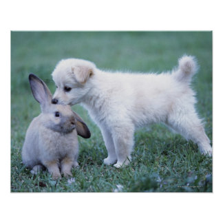 Puppy and Lop Ear Rabbit on lawn Poster