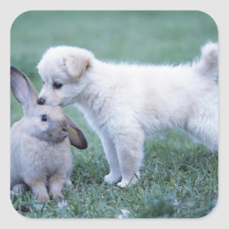 Puppy and Lop Ear Rabbit on lawn Square Sticker