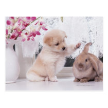 Puppy and Lop Ear Rabbit Postcard