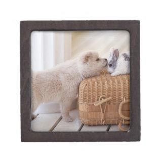 Puppy and rabbit gift box