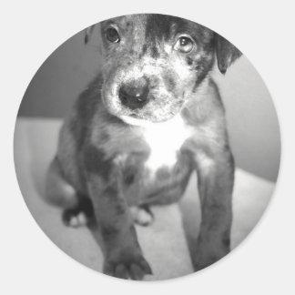 Puppy Assimilator Round Stickers