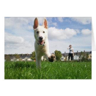 Puppy at Play Greeting Card