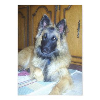 puppy Belgian_Tervueren.png Card