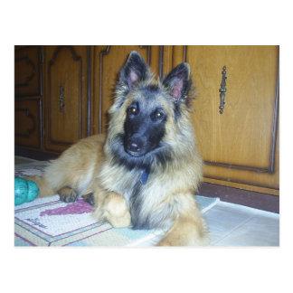 puppy Belgian_Tervueren.png Postcard