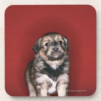Puppy Beverage Coaster