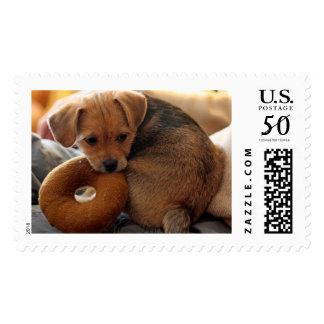 puppy biting her toy postage