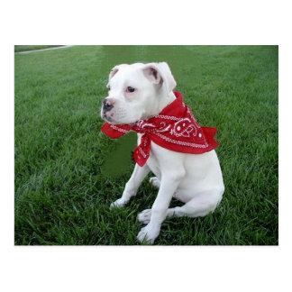 puppy Boxer_white_bandana.png Postcard