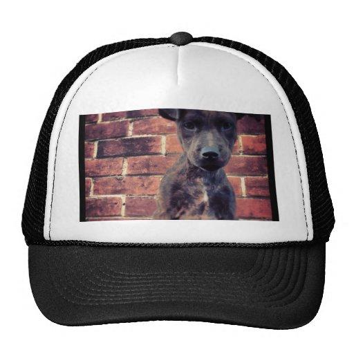 Puppy & brick work photo design mesh hats