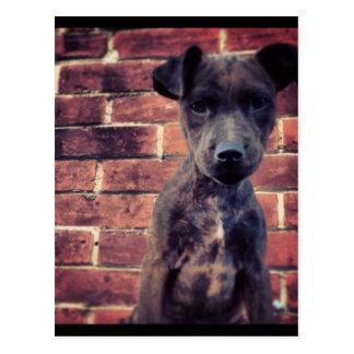 Puppy & brick work photo design postcard