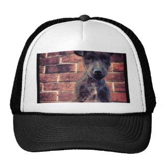 Puppy & brick work photo design trucker hat