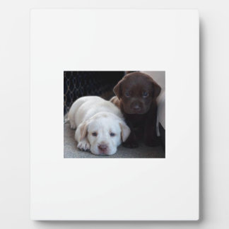 Puppy Brothers Plaque