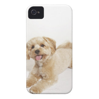 Puppy (Canis familiaris) 2 Case-Mate iPhone 4 Case