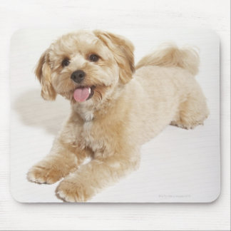 Puppy (Canis familiaris) 2 Mouse Pad