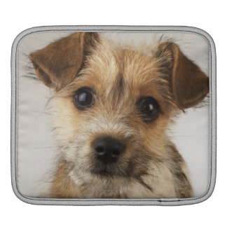 Puppy (Canis familiaris) iPad Sleeves