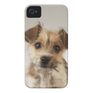 Puppy (Canis familiaris) iPhone 4 Case-Mate Case