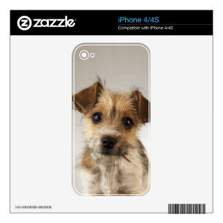 Puppy (Canis familiaris) iPhone 4S Skins