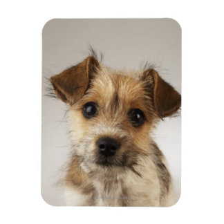 Puppy (Canis familiaris) Magnet