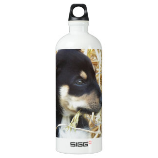 puppy chomping hay aluminum water bottle