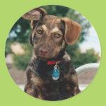 Puppy Classic Round Sticker