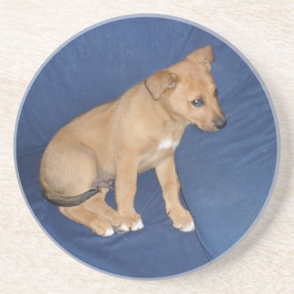 Puppy Coaster