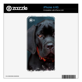 Puppy Decals For The iPhone 4S