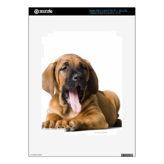 Puppy Dog 2 Skins For iPad 3