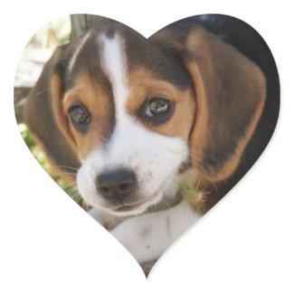 Beagle Dog Puppy Love