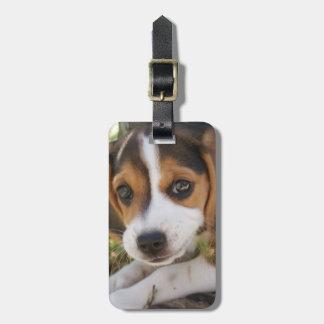 Puppy Dog Beagle Tag For Luggage