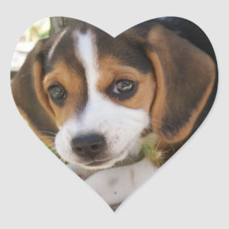 Puppy Dog Beagle Heart Stickers