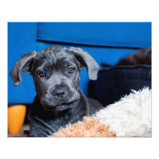 Puppy dog eyes lets play photo print