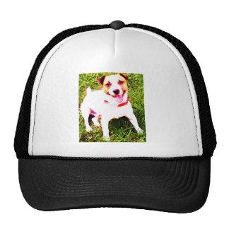 puppy dog, Jack Daniels Trucker Hat