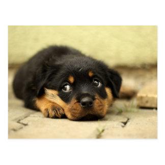 Puppy dog postcard