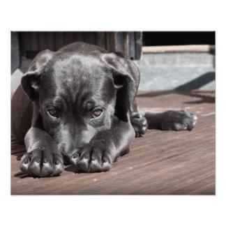 Puppy dog shy-cute photo print