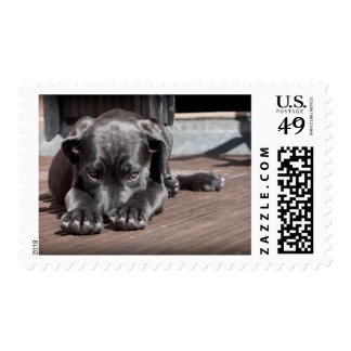 Puppy dog shy-cute postage