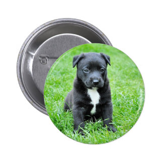 Puppy doggy pinback button