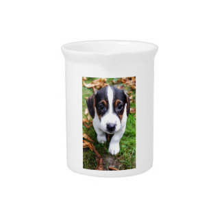 puppy drink pitcher