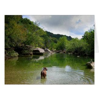 Puppy Exploring Barton Creek - Austin Texas Card