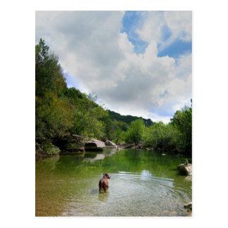 Puppy Exploring Barton Creek - Austin Texas Postcard