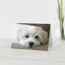 Puppy Eyes Card