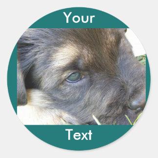 Puppy Eyes Envelope Seals Classic Round Sticker